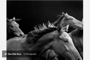 "Fillies. 2013-16. From the series ""American Thoroughbred."" CreditCourtesy of Neil Latham and Steven Kasher Gallery, New York."