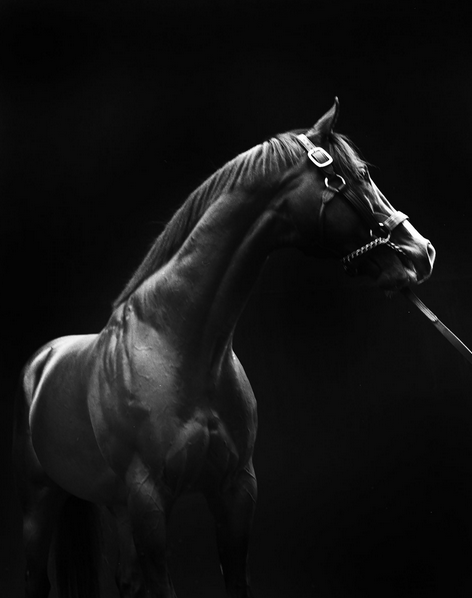 """American Thoroughbred. "" Photo courtesy of Steve Kasher Gallery"